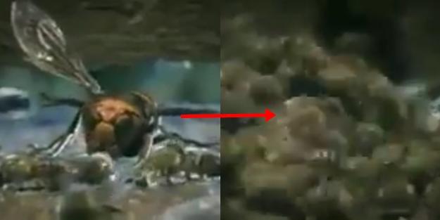 Arı kovanına giren eşek arısının ibretlik sonu