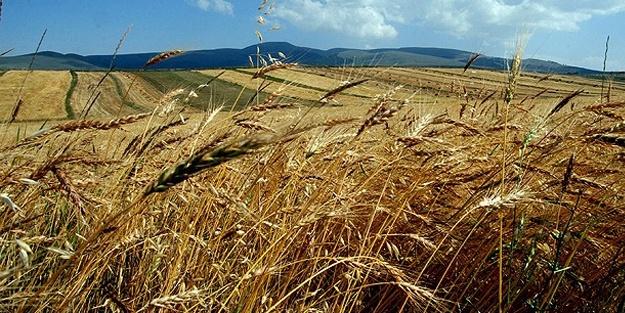 Rusya, 45 milyon ton tahıl ihraç edecek
