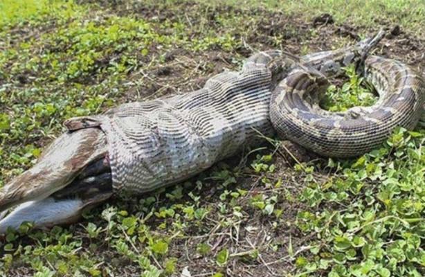 Hindistan'ın Gujarat eyaletindeki bir hayvanat bahçesinde çekilen fotoğraflar görenleri dehşete düşürdü.