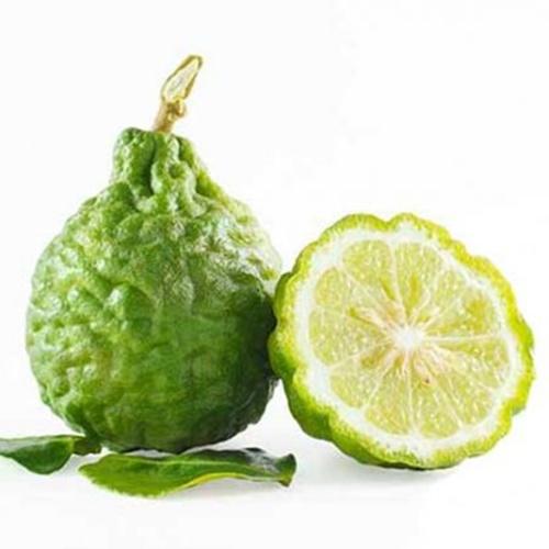 Esansı yeşilimtırak veya sarımtırak yeşil renktedir. Acı fakat hoş kokuludur.