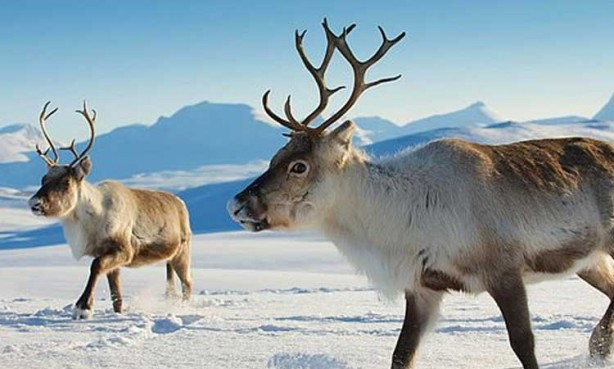İnsan ölümüne en çok neden olan hayvan hangisidir?.. İşte her biri şaşırtıcı bilgiler