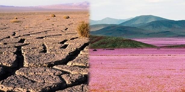 Burası dünyanın en kurak yeri: Tam 400 yıldır toprağa tek damla yağmur düşmedi