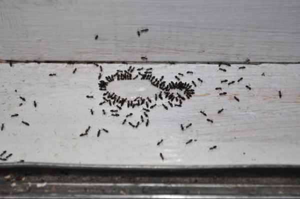 İşte böceklerden doğal yollarla kurtulma rehberi...