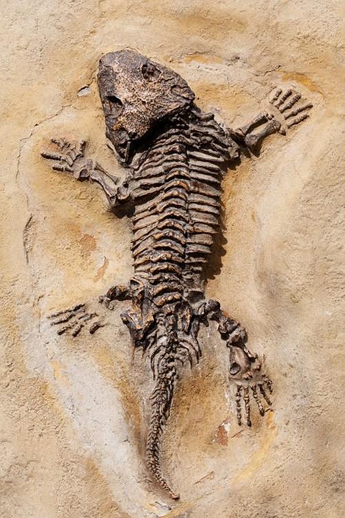 fosil-nasil-olusur-818794.jpg