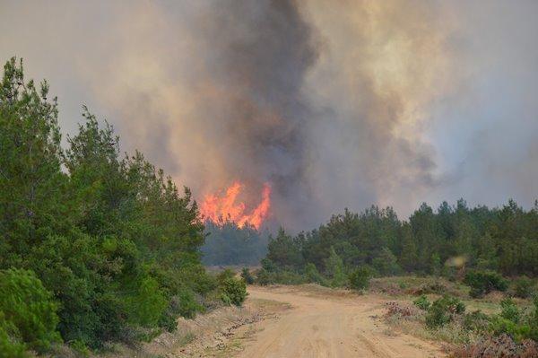 Foto - Pakdemirli, açıklamasının ardından Manisa'daki son programını iptal ederek Çanakkale'deki yangın bölgesine hareket etti.
