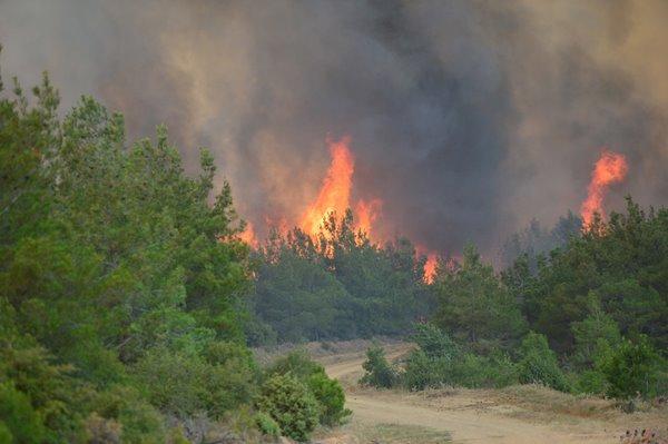 Foto - Aktaş, yangının ne kadar alanda etkili olduğunu yönelik henüz bir tespitin bulunmadığını, herhangi bir can kaybı ve yaralanmanın da olmadığını kaydetti.
