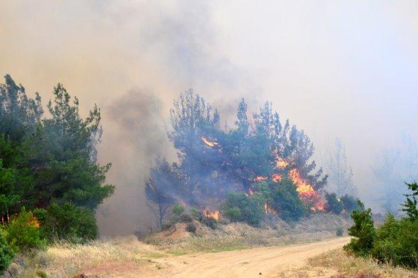Foto - Gazetecilere Çanakkale Gelibolu'daki orman yangınına ilişkin açıklama yapan Pakdemirli, yangınla ilgili çalışmaların sürdüğünü belirterek şunları söyledi: