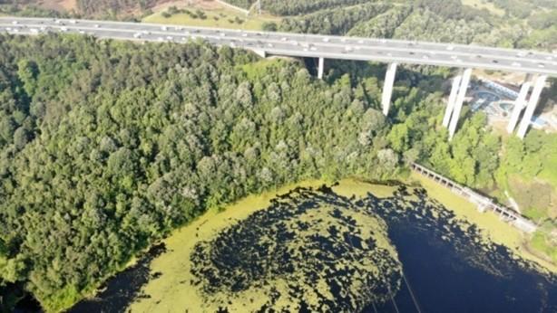 Foto - İki yıl önce dip çamuru temizlenen barajın su yüzeyi yeşile büründü.