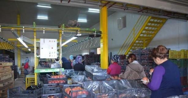 Foto - Paketleme işçisi 1.653