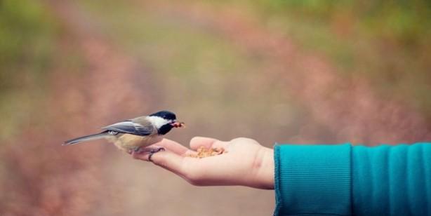 İslam'a iman etmediği halde iyilik yapanların ahirette durumları ne olacak?