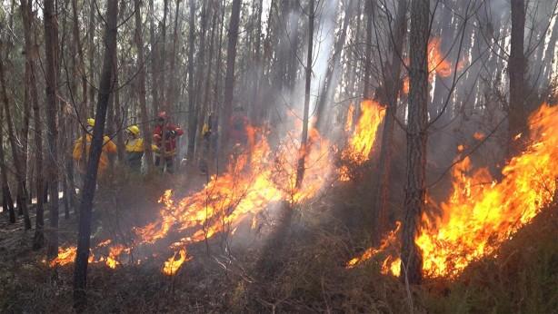 Japonya'daki orman yangınıyla ilgili yeni gelişme