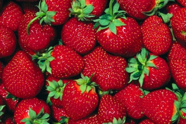 Daha uzun süre dayanması için çilek üzerinde de diğer meyvelerde olduğu gibi ne yazık ki hormon kullanılmaktadır.