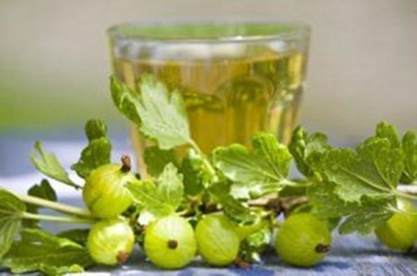 Bektaşi üzümünün meyveleri veya yapraklarından çay yapılmasıyla adet düzensizliğini ve uzamış menopoz kanamasını normal hale getirir.