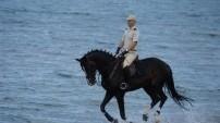 Bu atlar çok özel!