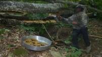 Doğal orman balı hasadına başlandı
