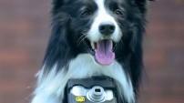 Dünyada bir ilk 'Fotoğrafçı Köpek'
