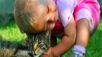 Kedi hırıltısının insan sağlığı üzerindeki 7 ilginç etkisi