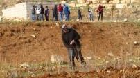 Yaşlı çiftçi İsrail mermilerine aldırmadan arazisini ekiyor