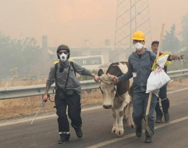 Foto - Antalya'nın Manavgat, Gündoğmuş, Akseki ve Alanya ilçelerindeki 13 mahallede yangın devam ediyordu. Manavgat'ta, alevlerin tehdit ettiği Sırtköy Mahallesi, Gündoğmuş'ta da Ümütlü ve Senir mahalleleri tahliye edildi. Ümütlü Mahallesi'ne, duman nedeniyle mahsur kalan 10'u itfaiye personeli 20 kişi kurtarıldı. Akseki ilçesi Kepezbeleni Mahallesi'ndeki yangın, kontrol altına alınmaya çalışılıyor. Gülen Dağ'daki yangın da devam ediyor. 4 ilçede yangından 50 bin hektar alan etkilendi.