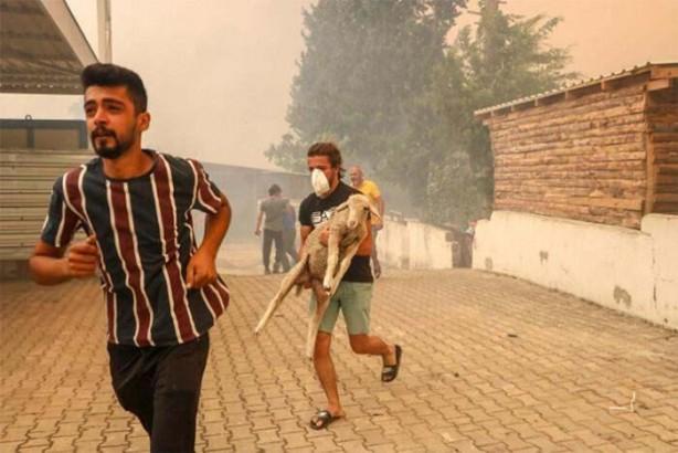 Foto - Manavgat'ın Yeniköy mahallesindeki yangında alevlerin ortasında kalan evlerdeki vatandaşı jandarma ekipleri siren çalarak uyarıp tahliye etti. Bazı çiftçiler küçükbaş hayvanlarını sürü halinde önüne alarak mahalleden kaçtı