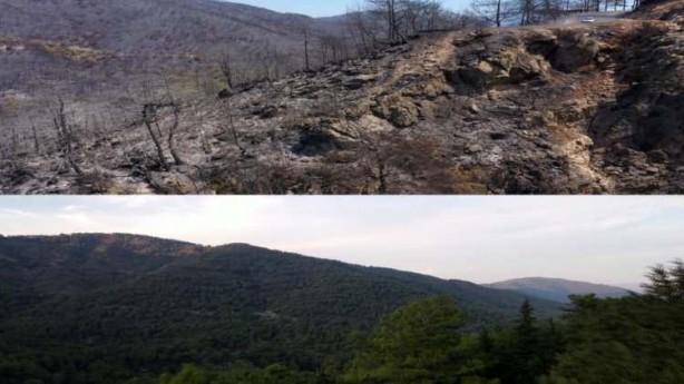 Foto - Türkiye'nin ciğerlerinin yandığı Muğla'nın Marmaris ilçesine bağlı İçmeler Mahallesi'ndeki ormanlık alanın öncesi ve sonrası görenlerin yüreğini yaktı.