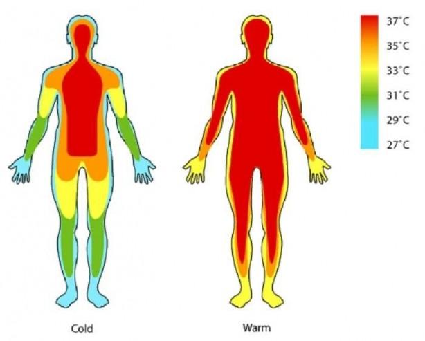 Foto - 37 DERECELİK SABİT SICAKLIĞIMIZ VAR: Vücudumuz, bizi hayatta tutan kimyasal reaksiyonların gerçekleşmesini sağlamak için yaklaşık 37 derecelik sabit bir sıcaklık oluşturuyor. Ancak bu verimli bir prosedür değil çünkü ürettiğimiz ısının çoğu iki metrekareyi bulan cildimizde kayboluyor.