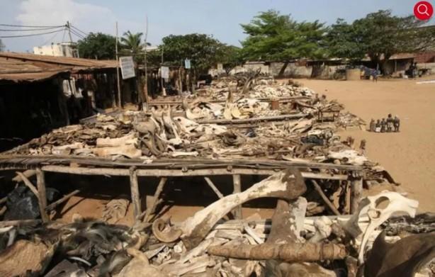 Foto - Togo / Akodessewa Pazarı Sözde büyülü nesneler ve şifalı otlar satan bu pazar Batı Afrika'nın Togo başkentli Lomé'nin merkezinde bulunuyor. Akodessewa'da bulunan cisim çeşitliliği tamamen egzotik: Büyük öküz kafatası, maymunların kurumuş kafaları, manda ve leoparların ve daha pek çok 'büyülü' maddeleri elde etmek mümkün.