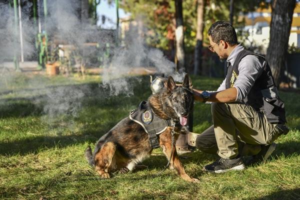 Foto - Özellikle Doğu ve Güneydoğu Anadolu bölgelerinde terör örgütüne yönelik düzenlenen meskun mahal operasyonlarında görev alan dedektör köpek, çok sayıda patlayıcının bulunup imha edilmesine katkı sağladı.