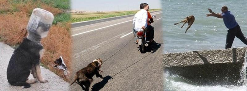 hayvanlara işkence ve eziyet ile ilgili görsel sonucu