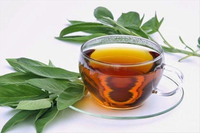 okaliptus çayı ve kullanım alanları