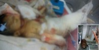 10 günlük bebeği fareler öldürdü!