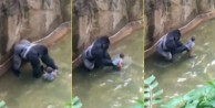 4 yaşındaki çocuk gorilin yanına düştü