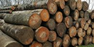 3 bin 235 metreküp orman emvali satıldı