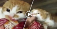 Acıkan kedi ekmek poşetine böyle yapıştı