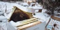 Amerika'da iki çocuk, 500 bin arının ölümüne yol açmaktan gözaltına alındı