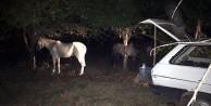 At eti satmaktan ikinci kez tutuklandı