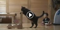 Bebeğe yürümeyi öğreten kedi!