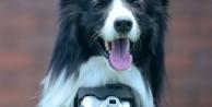 Dünyada bir ilk 'Fotoğrafçı Köpek' - FOTO