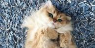 Dünyanın en fotojenik kedisini gördünüz mü?