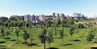 Başkent'te 150 bin ağaç toprakla buluşacak
