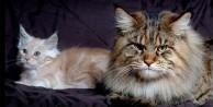 Görenleri şaşırtan dev hayvanlar - FOTO