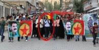HDP'li vekil PKK'lı teröristin tabutunu taşıdı!