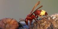 Kanser tedavisinde yeni umut: Eşek arısı