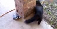 Kaplumbağ kediyi böyle kovaladı!       /VİDEO