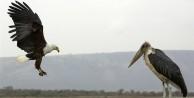 Kartal ve leyleğin ilginç anları - FOTO