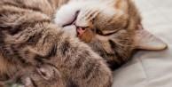 Kediler rüya görür mü?