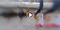 Köpek dövüştüren gençler sosyal medyayı ayağa kaldırdı