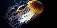 Okyanusun büyük canlıları kaç metre? - FOTO