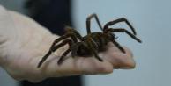 Örümceğin ısırdığı çocuk zor kurtuldu