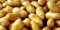 Patates fiyatları normale döndü